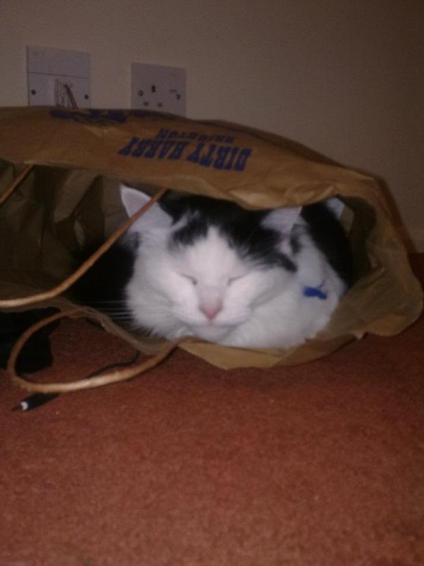 Carrier bag cat