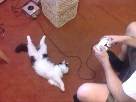 Video game cat