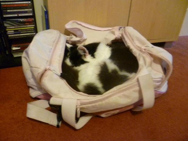 Sleeping in my gym bag cat