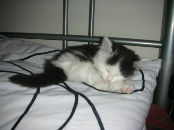 Curling up on my pillow kitten