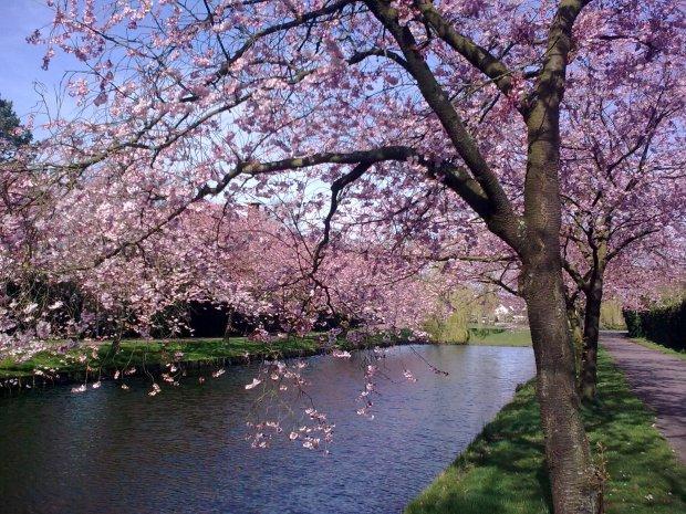 Spring in Naarden