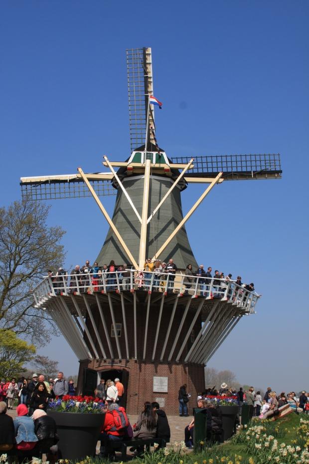 Windmill carnage