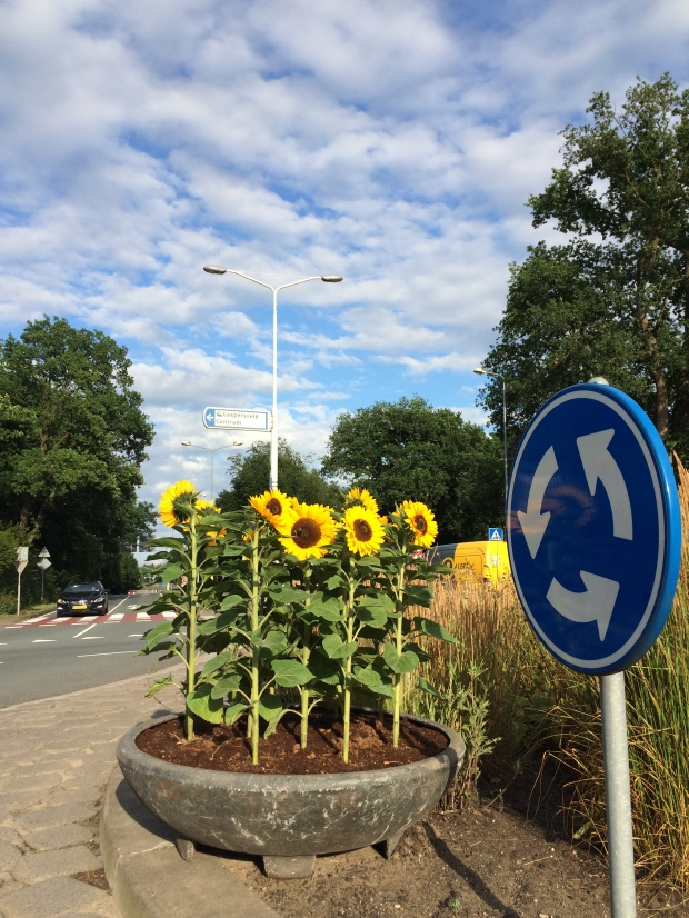Sunflowers in Hilversum (Zonnebloemen in Hilversum)