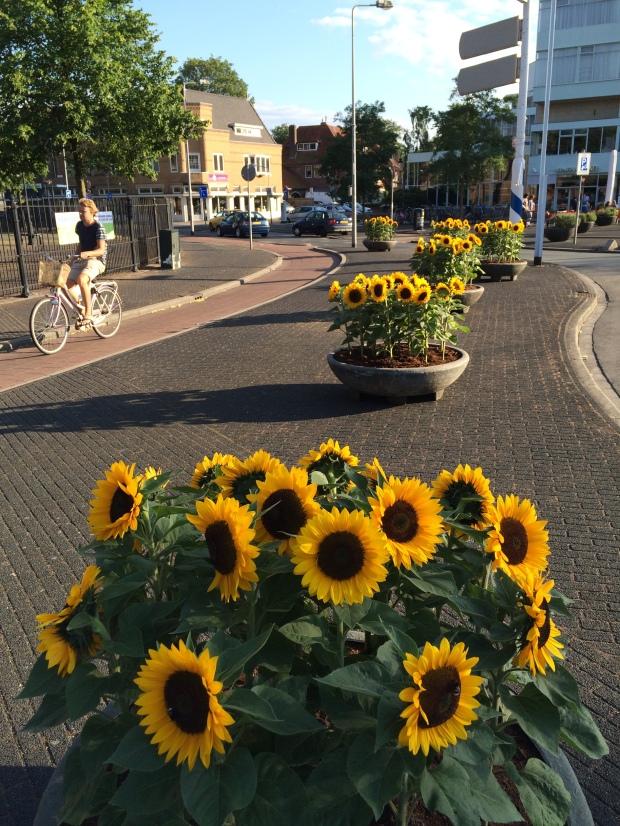 Sunflowers at St Vitus Church, Hilversum. (Zonnebloemen bij de St Vitus kerk in Hilversum)