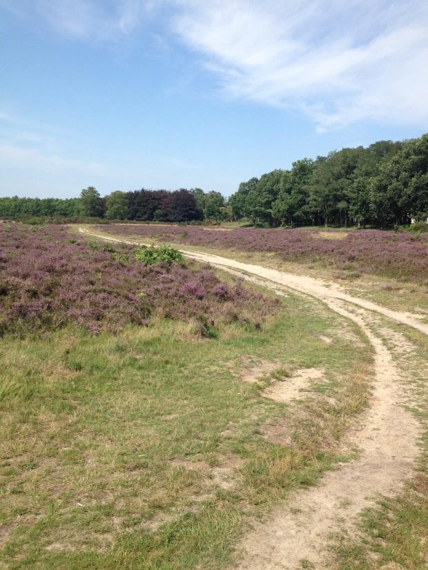 Hoorneboegse Heide, Hilversum