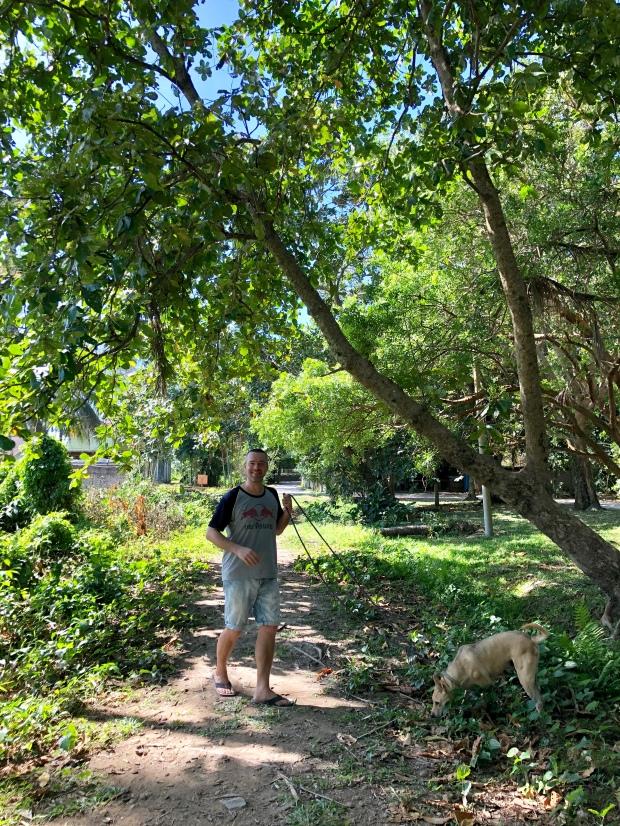 Dog walking at Langkawi LASSie
