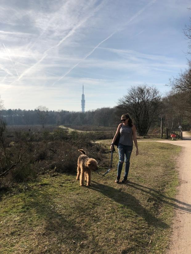 Walking with Cisko, Dierenasiel Crailo
